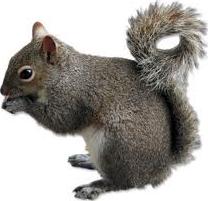 Squirrel Control In Gainesville Florida