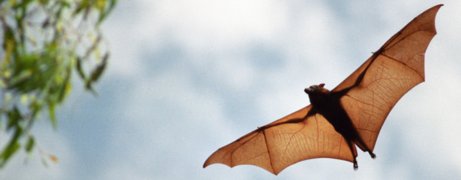 Bat Exclusion Season Begins Bat Exclusion Season Begins August 15th