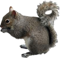 Squirrel Removal In Gainesville Florida